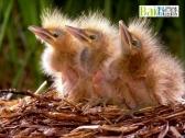 人类在保护鸟类中的角色?