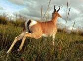 社会各界对保护对角羚做了哪些工作?